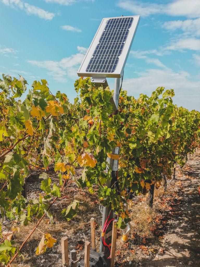 Solarmodul auf einem Weinberg